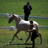 Фестиваль лошадей породы лузитано в Португалии - фото 4_wm-200x200, главная Разное События Фото , конный журнал EquiLIfe