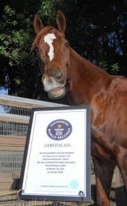 Лукас - самый умный конь в мире - фото 530598_10151070203836727_199539085_n_wm-186x300, главная Конные истории Разное , конный журнал EquiLIfe