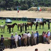 Фестиваль лошадей породы лузитано в Португалии - фото 5_wm-200x200, главная Разное События Фото , конный журнал EquiLIfe
