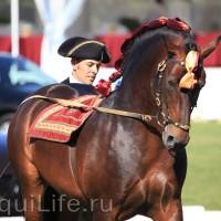 Фестиваль лошадей породы лузитано в Португалии - фото 63_wm-200x200, главная Разное События Фото , конный журнал EquiLIfe