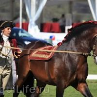 Фестиваль лошадей породы лузитано в Португалии - фото 64_wm-200x200, главная Разное События Фото , конный журнал EquiLIfe