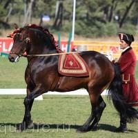 Фестиваль лошадей породы лузитано в Португалии - фото 65_wm-200x200, главная Разное События Фото , конный журнал EquiLIfe