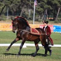 Фестиваль лошадей породы лузитано в Португалии - фото 66_wm-200x200, главная Разное События Фото , конный журнал EquiLIfe