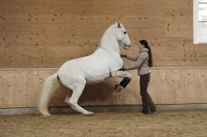 Семинар Ани Беран в Германии - фото 7DrJw5E2rVc-300x199, Новости , конный журнал EquiLIfe