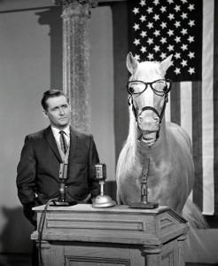Мистер Эд - эксцентричная говорящая лошадь! - фото image001-246x300, Фильмы про лошадей , конный журнал EquiLIfe