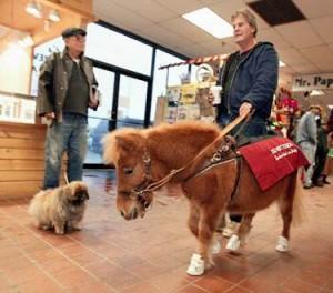 Пони-поводыри: маленькие помощники в большом деле - фото image0021-300x264, главная Интересное о лошади Конные истории Разное , конный журнал EquiLIfe