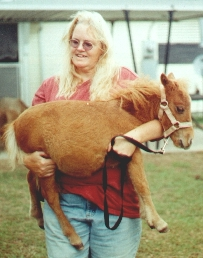 Пони-поводыри: маленькие помощники в большом деле - фото image005, главная Интересное о лошади Конные истории Разное , конный журнал EquiLIfe