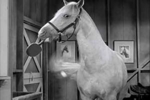 Мистер Эд - эксцентричная говорящая лошадь! - фото image0171-300x200, Фильмы про лошадей , конный журнал EquiLIfe