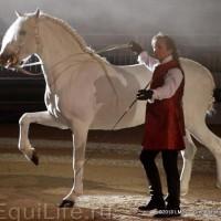 Фоторепортаж: Конная Алхимия Марио Люраши - фото 05-200x200, главная Конные истории Разное Фото , конный журнал EquiLIfe