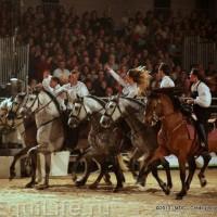 Фоторепортаж: Конная Алхимия Марио Люраши - фото 07-200x200, главная Конные истории Разное Фото , конный журнал EquiLIfe