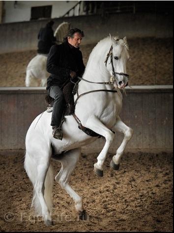 Марио Люраши: «Я не хочу драться, но я умею добиваться своего» - фото 11_wm, главная Интервью Марио Люраши Тренинг , конный журнал EquiLIfe