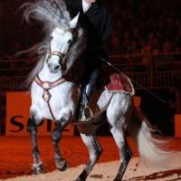 Фоторепортаж: Конная Алхимия Марио Люраши - фото 35-200x200, главная Конные истории Разное Фото , конный журнал EquiLIfe