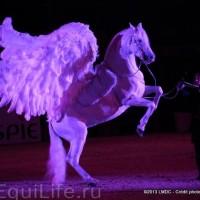 Фоторепортаж: Конная Алхимия Марио Люраши - фото 45-200x200, главная Конные истории Разное Фото , конный журнал EquiLIfe