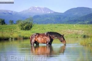 Фотосеминар в Карачаево-Черкессии - фото 536784_4705230968741_282904799_n_wm-300x199, Новости , конный журнал EquiLIfe