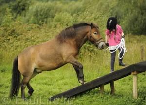 Огонь, вода и медные трубы: конное аджилити - фото R_d9a2El4O4_wm-300x216, главная Интересное о лошади Разное Тренинг , конный журнал EquiLIfe