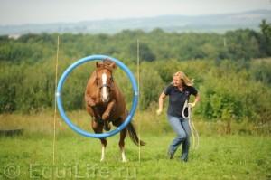 Огонь, вода и медные трубы: конное аджилити - фото v-ZerUHgP8Y_wm-300x199, главная Интересное о лошади Разное Тренинг , конный журнал EquiLIfe
