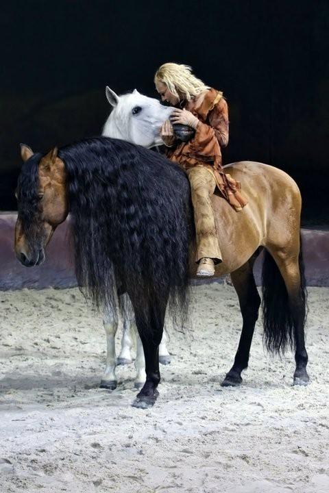 Sylvia Zerbini (Сильвия Зербини) - фото 264938390548507025_D4wKKD2c_c, главная Конные истории Разное , конный журнал EquiLIfe