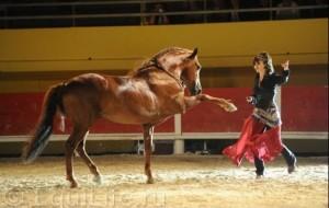Клеменс Февр (Clémence Faivre) - фото 685_wm-300x190, главная Конные истории Разное , конный журнал EquiLIfe