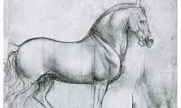 Фрагмент рисунка Леонардо да Винчи
