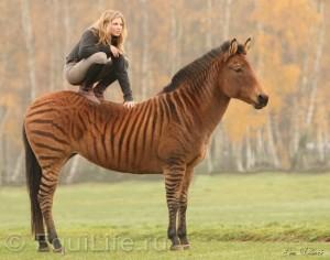 Магдалена Поммье (Magdalena Pommier) - фото ukerm8aomh_wm-300x236, главная Конные истории Разное , конный журнал EquiLIfe