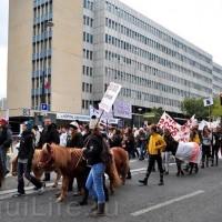 Протест конных школ во Франции - фото 1_wm-200x200, Новости , конный журнал EquiLIfe