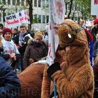 Протест конных школ во Франции - фото 5_wm1-200x200, Новости , конный журнал EquiLIfe