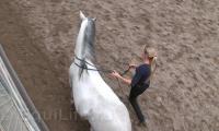 Фото: paardenbegrijpen.nl