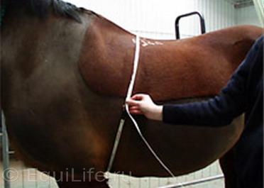 Пожилые лошади. Особенности, здоровье и уход. Ч.1 - фото -груди-лошади_wm, главная Здоровье лошади Рацион Содержание лошади , конный журнал EquiLIfe