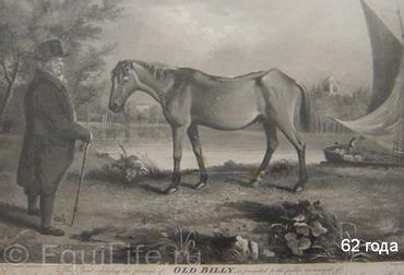 Пожилые лошади. Особенности, здоровье и уход. Ч.1 - фото -Билли_wm, главная Здоровье лошади Рацион Содержание лошади , конный журнал EquiLIfe