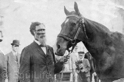 Джим Кей - умнейшая лошадь. Невероятная история из 1904-го. - фото DckD_TunRKo, главная Конные истории Разное , конный журнал EquiLIfe