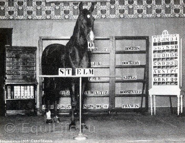 Джим Кей - умнейшая лошадь. Невероятная история из 1904-го. - фото ll2pNaTkO-Q, главная Конные истории Разное , конный журнал EquiLIfe