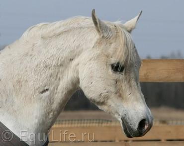 Пожилые лошади. Особенности, здоровье и уход: Ч.2 - фото 3-апреля-047-копия_wm, главная Здоровье лошади Конюшня Копыта Рацион Содержание лошади , конный журнал EquiLIfe