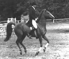 Анджей Салацки (Andrzej Sałacki) - фото default2_wm, главная Конные истории Разное , конный журнал EquiLIfe