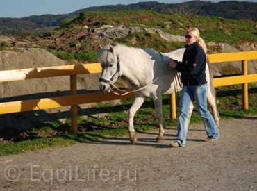 Хелен Офстад (Ellen Ofstad) о кликер-методе и других системах тренинга лошадей. - фото hest_wm, Интервью Поведение лошади Тренинг , конный журнал EquiLIfe