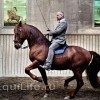 Фото: facebook.com/pages/Academic-Art-of-Riding-by-Bent-Branderup