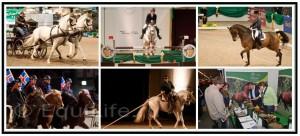 Конные выставки 2014 - фото _wm-300x136, главная Новости Разное , конный журнал EquiLIfe