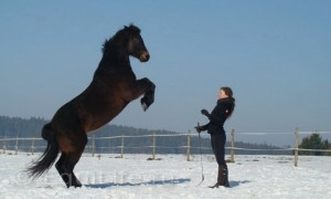 Конные семинары и практикумы 2014 - фото _wm-300x180, Новости , конный журнал EquiLIfe