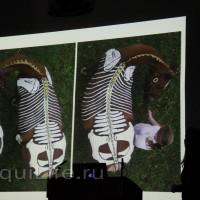 Фоторепортаж: Научная конференция The Back & Beyond - фото 07_wm-200x200, главная Здоровье лошади Разное События Тренинг Фото , конный журнал EquiLIfe