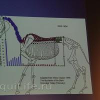 Фоторепортаж: Научная конференция The Back & Beyond - фото 23_wm-200x200, главная Здоровье лошади Разное События Тренинг Фото , конный журнал EquiLIfe