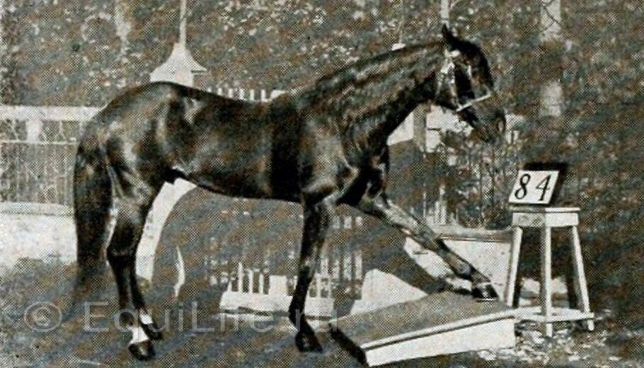 Умные лошади - фото 5fgInCjtYAk, главная Конные истории Разное , конный журнал EquiLIfe