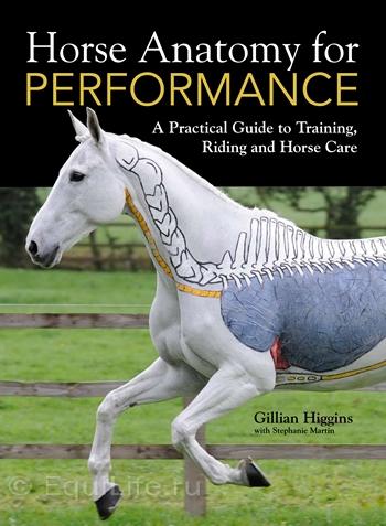 Джиллиан Хиггинс (HORSES INSIDE OUT): «Лошади находятся в безопасности рядом с людьми» - фото Ha4pFront_wm, главная Джилиан Хиггинс (Horses Inside Out) Интервью События Содержание лошади Тренинг , конный журнал EquiLIfe