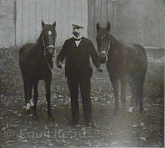 Умные лошади - фото O8IkHGJ0MPM, главная Конные истории Разное , конный журнал EquiLIfe