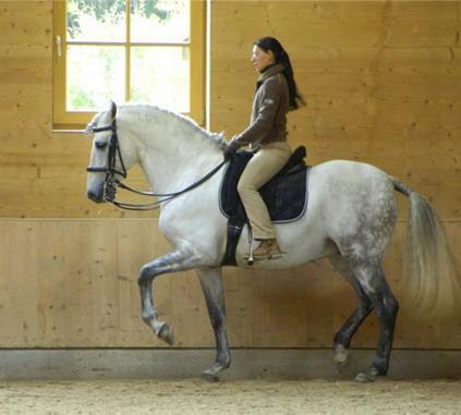 Конные семинары и практикумы 2014 - фото eed2eec1be1e, Новости , конный журнал EquiLIfe