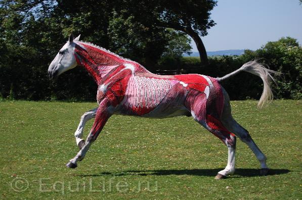 Джиллиан Хиггинс (HORSES INSIDE OUT): «Лошади находятся в безопасности рядом с людьми» - фото horse-events-138921036251496200_wm, главная Джилиан Хиггинс (Horses Inside Out) Интервью События Содержание лошади Тренинг , конный журнал EquiLIfe