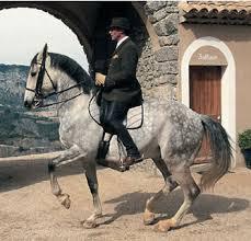 Конные семинары и практикумы 2014 - фото images, Новости , конный журнал EquiLIfe