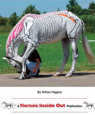 Джиллиан Хиггинс (HORSES INSIDE OUT): «Лошади находятся в безопасности рядом с людьми» - фото pilatescover_wm, главная Джилиан Хиггинс (Horses Inside Out) Интервью События Содержание лошади Тренинг , конный журнал EquiLIfe