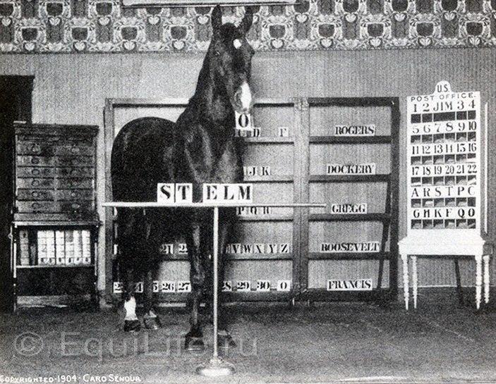Умные лошади - фото poXyRX6JuIo, главная Конные истории Разное , конный журнал EquiLIfe