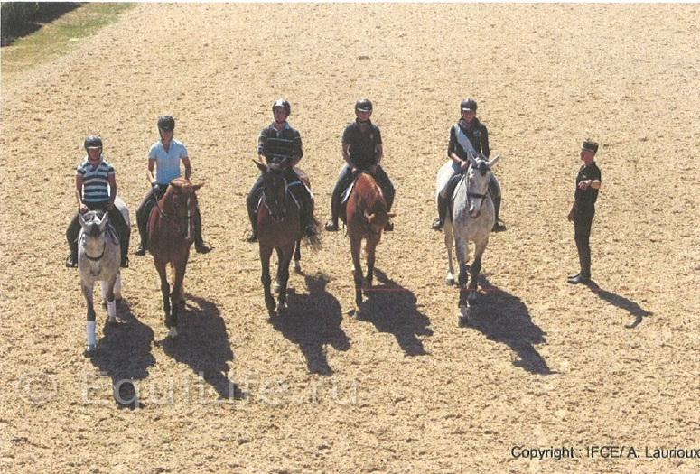 Cadre Noir выберет 6 лучших - фото _wm, Интересное о лошади Новости Разное , конный журнал EquiLIfe