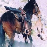 Лошади – не только «животное-жертва» - фото 1_wm-200x200, главная Интересное о лошади Новости Разное , конный журнал EquiLIfe