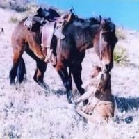 Лошади – не только «животное-жертва» - фото 2_wm-200x200, главная Интересное о лошади Новости Разное , конный журнал EquiLIfe